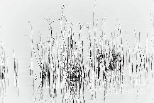 Abstract Water Oats  by Rui Militao