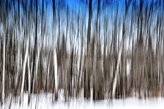 Abstract Winter Forest - Minnesota by TB Sojka