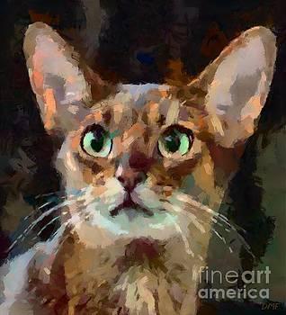 Abyssinian Cat by Dragica Micki Fortuna