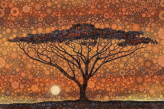 Acacia Sunset by Daniel McPheeters