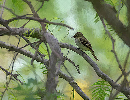 Acadian Flycatcher Photo Painting by Debra Martz