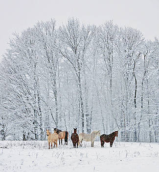Add A Touch Of Horses To The Winter Magic by Patricia Keller