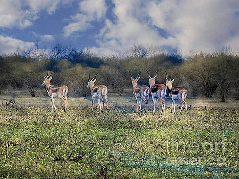 Addax-White Antelope Five Young Ones by Ella Kaye Dickey