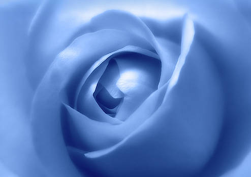 Adorable Soft Blue Rose  by Johanna Hurmerinta