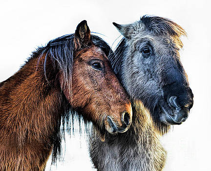 Affection by Diane LaPreta