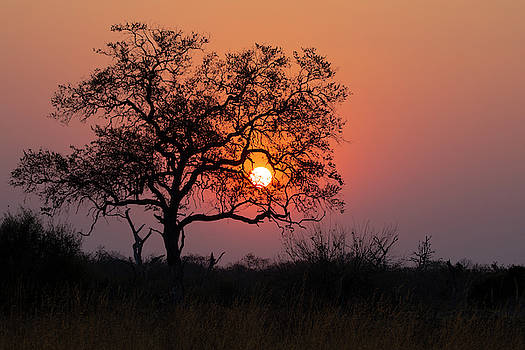 Africa Sunset by John Rodrigues