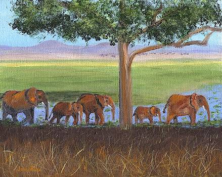 African Elephants by Jamie Frier