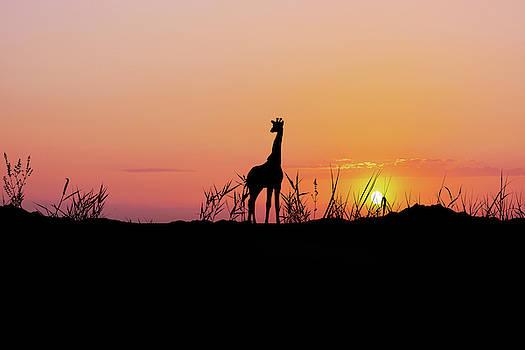 African giraffe by Art Spectrum
