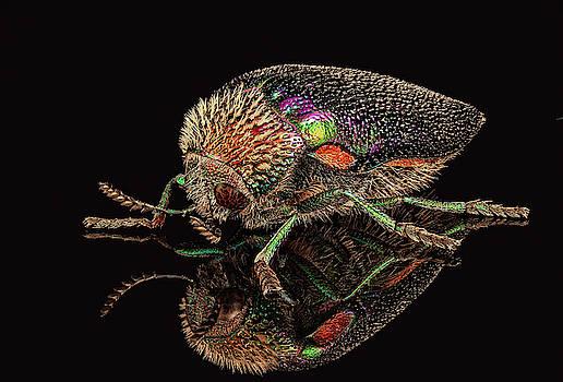 African Jewel Beetle by Gary Shepard