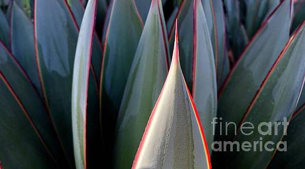 Agave Illuminated by Glennis Siverson