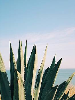 Agave by Traci Ling