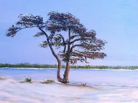 Ahus pine by Bernd Hau