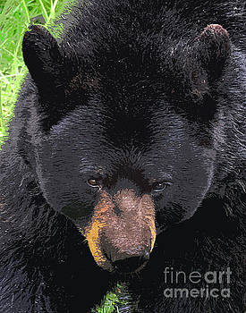 Alaskan Black Bear Head by Diane E Berry