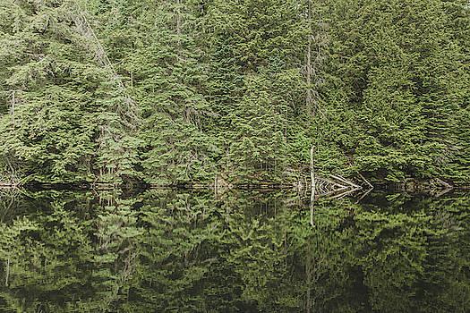 Algonquin Trees No 2 by Bruce Davis