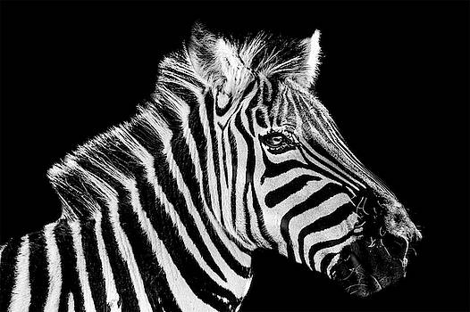 All About The Stripes by Alan Campbell