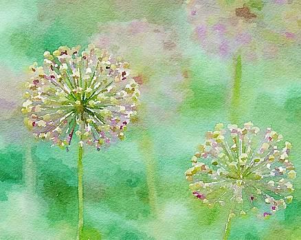 Allum - Soft Tints by Susan Rydberg
