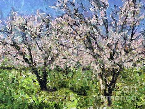 Almond Orchard in Full Bloom by Dragica Micki Fortuna