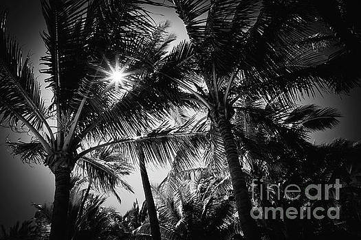 Aloha Palms Maui by Sharon Mau