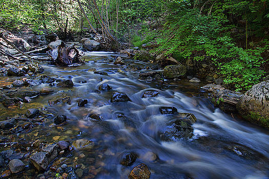 Along Mill Creek by Allan Van Gasbeck