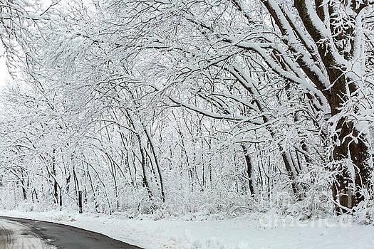 Along the Winter Road by Terri Morris
