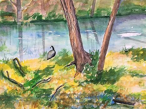Along Tookany Creek by Marita McVeigh
