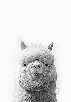 Alpaca  by Zapista Zapista
