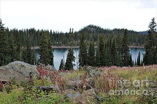 Alpine Lake Atop Grand Mesa by Tammie J Jordan