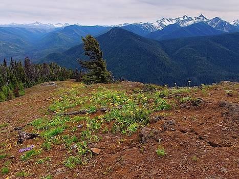Alpine Wildflowers by Allan Van Gasbeck