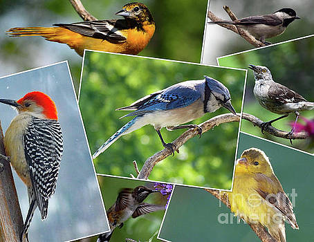 Cindy Treger - Amazing Colors of Nature - Bird Collage
