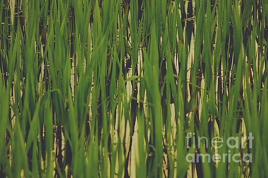 Amazon Grass by Cassandra Buckley