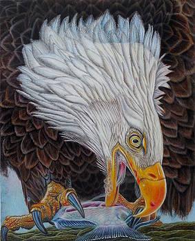 Amerian Bald Eagle Huntress by Karen Sharp