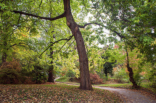 Jenny Rainbow - American Hackberry Tree 1