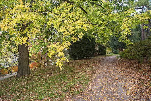 Jenny Rainbow - American Hackberry Tree in Autumn Dress