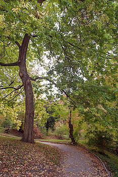 Jenny Rainbow - American Hackberry Tree