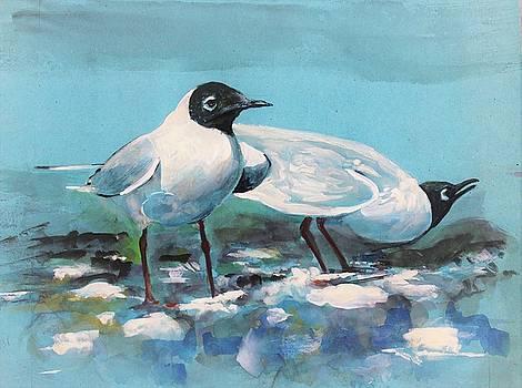 American Herring Gulls by Khalid Saeed