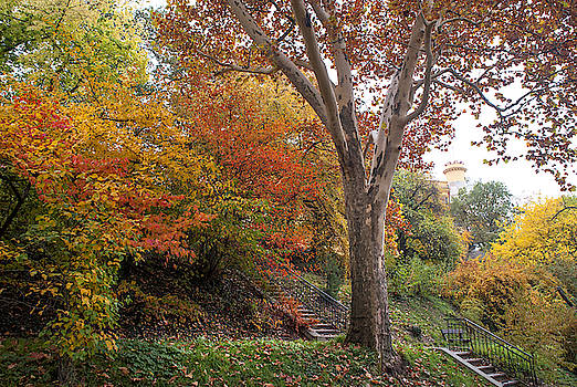 Jenny Rainbow - American Sycamore in Autumn Colors
