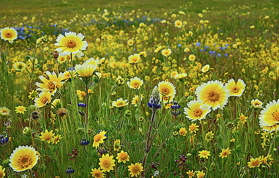 Among the Wildflowers by Kathy Yates