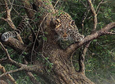 Amur Leopard Cub Climbing a Tree by Alan M Hunt