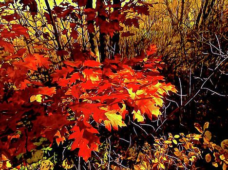 An Abstract Autumn by Elizabeth Tillar