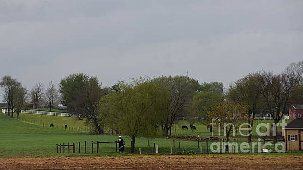 Christine Clark - An Amish Man Looking Out on His Farm