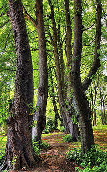 An Avenue Of Lime Trees by Jeff Townsend
