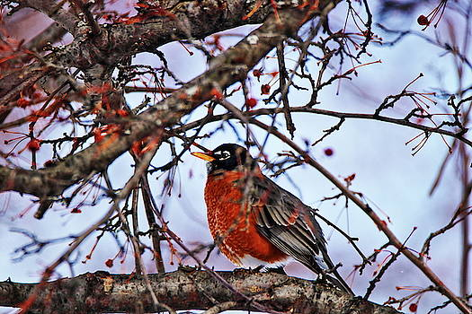 An early winter visitor by Gerald Salamone