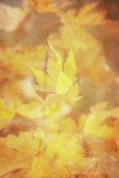 An echo of Autumn by Angela King-Jones