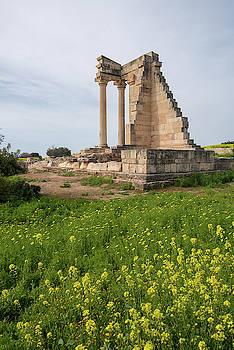 Ancient columns of Apollon Hylates, sanctuary in Limassol distri by Michalakis Ppalis