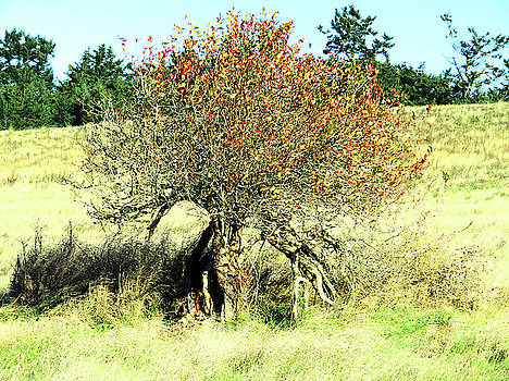 Ancient Tree on the Prairie by Marie Jamieson