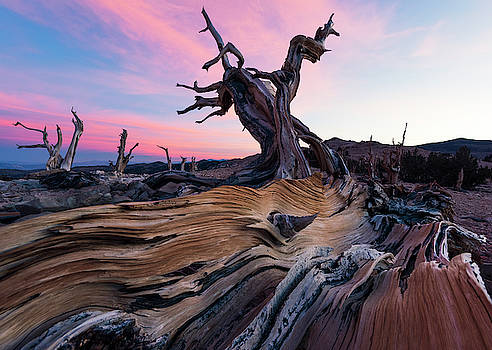 Ancient Wavelength... by Kevin Evans