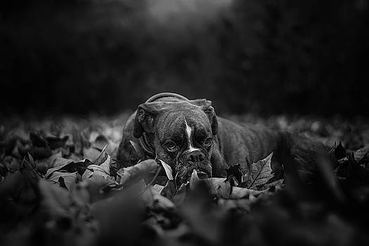 And The Leaves Came Tumbling Down by Tamas Szarka
