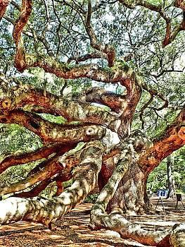 Angel Oak 1 by Christy Ricafrente