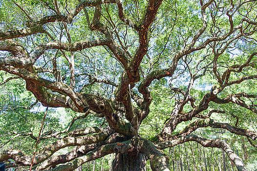 Angel Oak by Jackson Ball