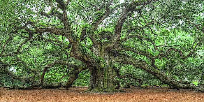 Angel Oak - Tree of Life by Don Mennig